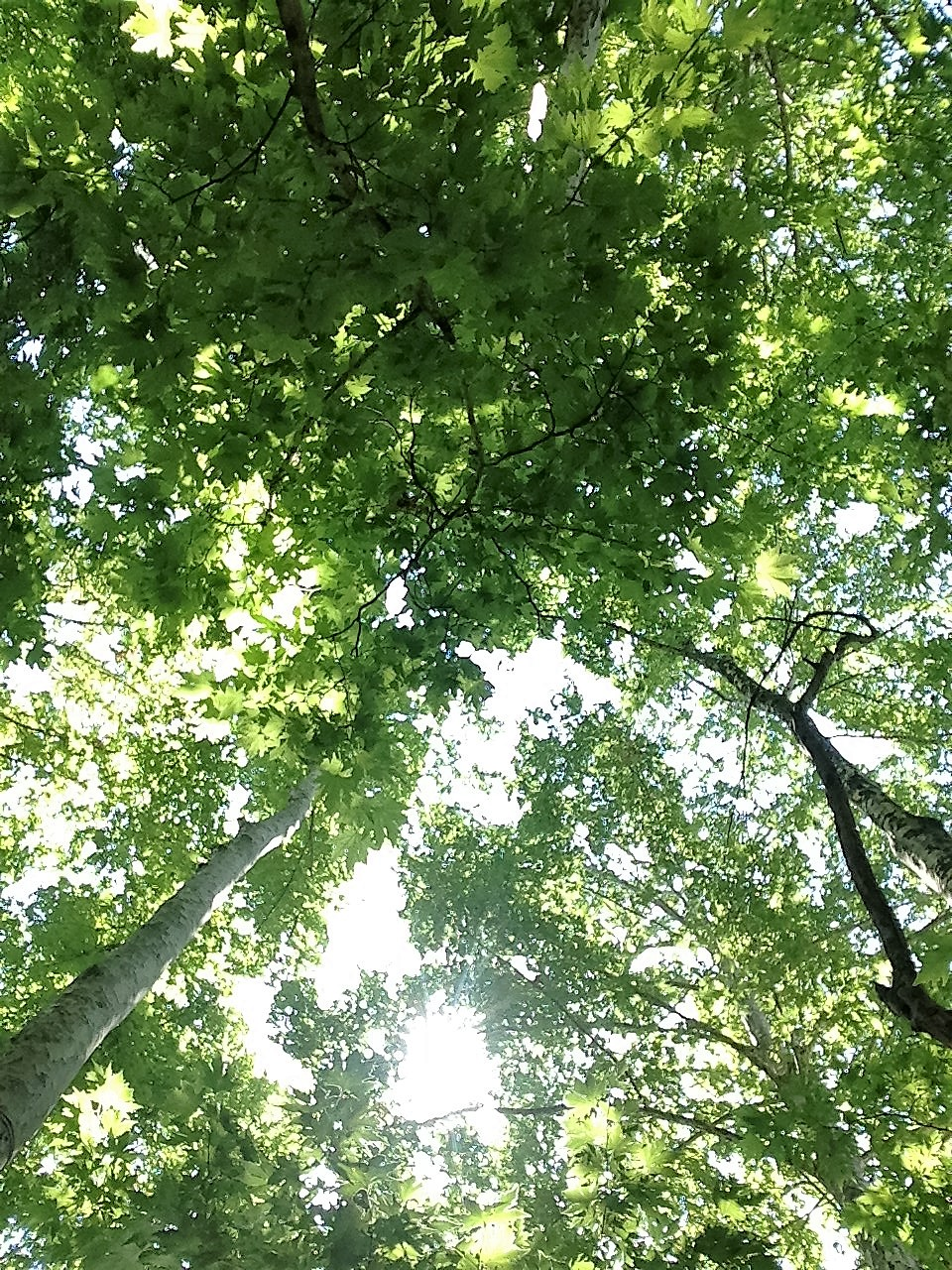 zubeyde-trees